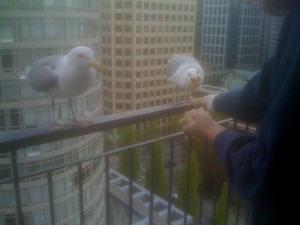 Seagulls outside our Vancouver hotel